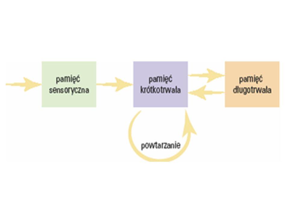 Dowody na istnienie pamięci semantycznej i epizodycznej 1/ w procesie poszukiwania zapamiętanej informacji podstawową rolę odgrywają płaty czołowe (Hasegawa i in., 1998).