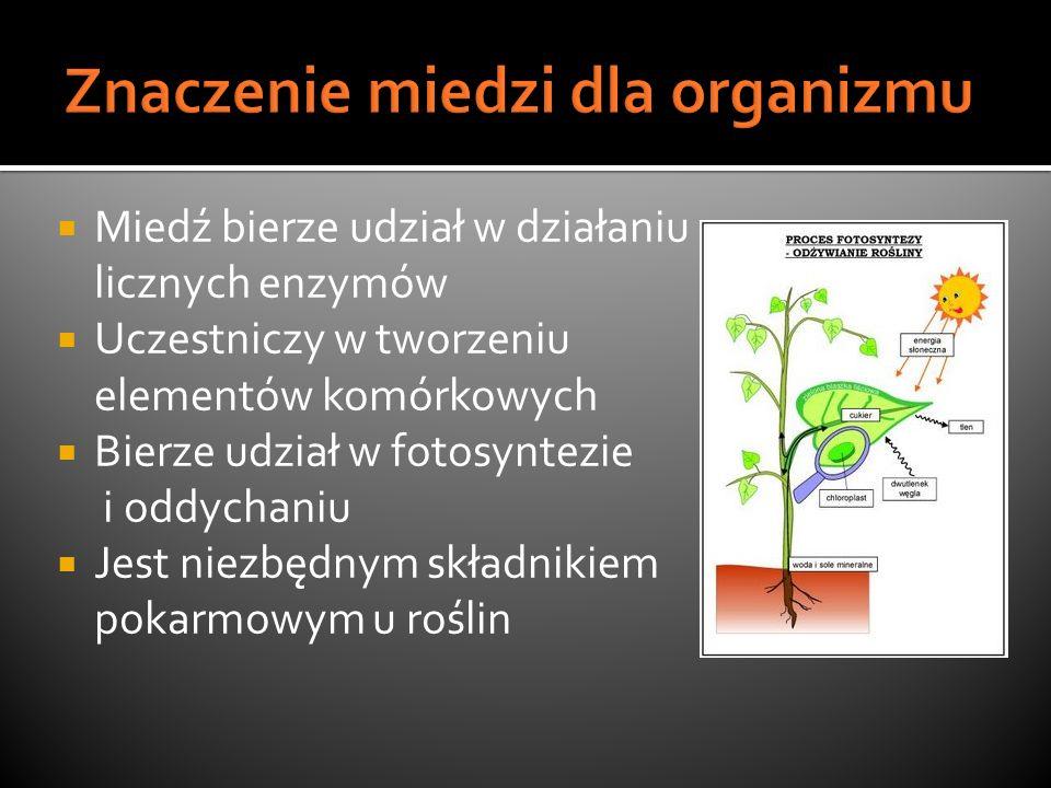 Miedź bierze udział w działaniu licznych enzymów Uczestniczy w tworzeniu elementów komórkowych Bierze udział w fotosyntezie i oddychaniu Jest niezbędn
