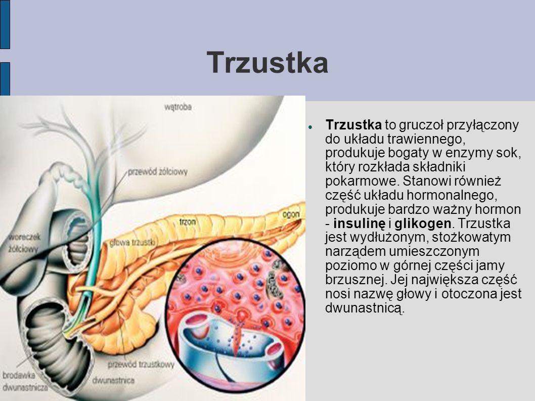 Trzustka Trzustka to gruczoł przyłączony do układu trawiennego, produkuje bogaty w enzymy sok, który rozkłada składniki pokarmowe. Stanowi również czę