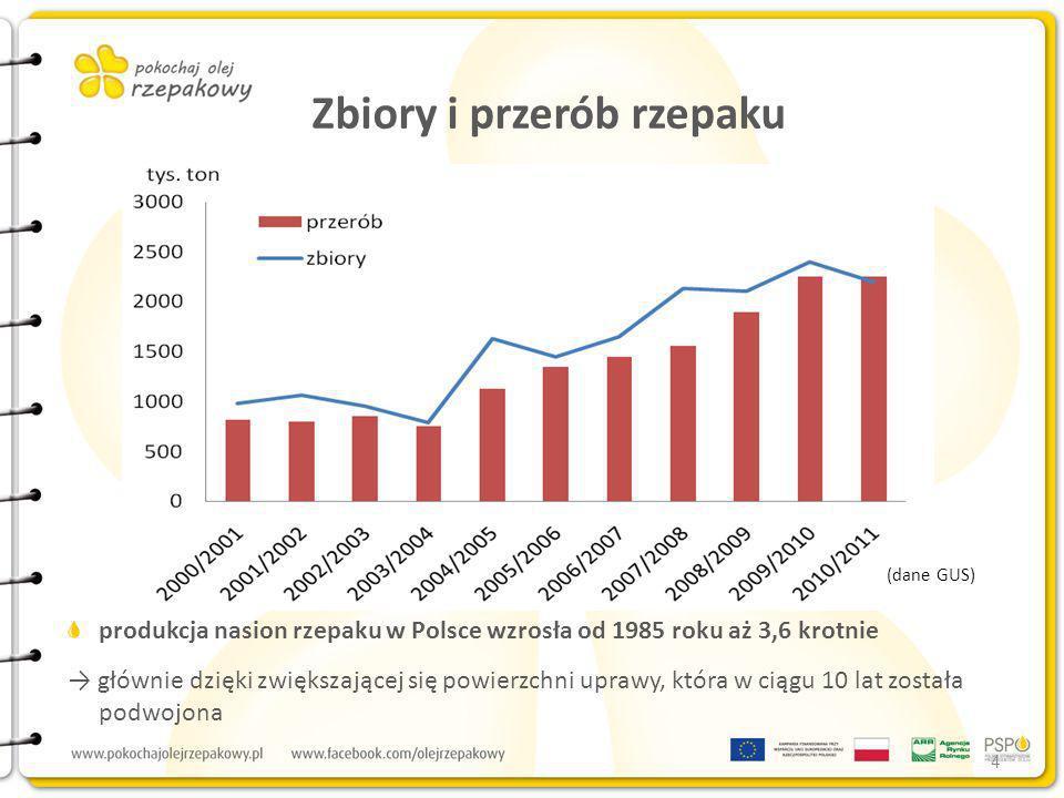 Zbiory i przerób rzepaku produkcja nasion rzepaku w Polsce wzrosła od 1985 roku aż 3,6 krotnie głównie dzięki zwiększającej się powierzchni uprawy, kt
