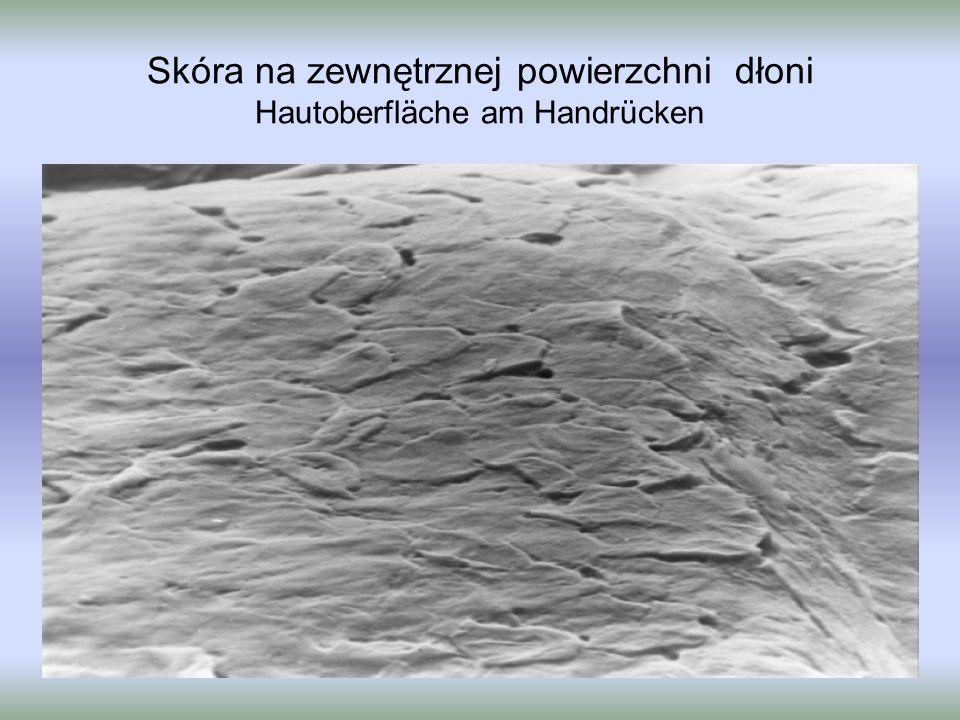 Skóra na zewnętrznej powierzchni dłoni Hautoberfläche am Handrücken