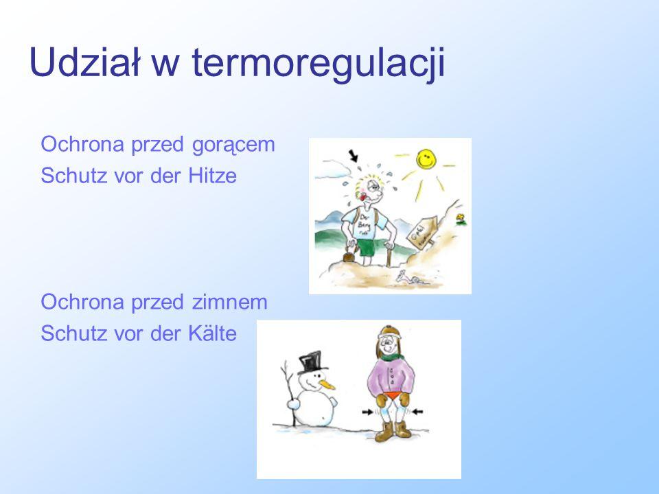 Udział w termoregulacji Ochrona przed gorącem Schutz vor der Hitze Ochrona przed zimnem Schutz vor der Kälte