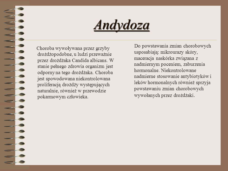 Andydoza Choroba wywoływana przez grzyby drożdżopodobne, u ludzi przeważnie przez drożdżaka Candida albicans. W stanie pełnego zdrowia organizm jest o