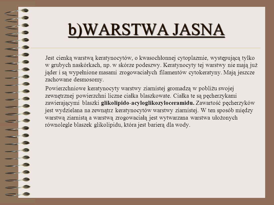 b)WARSTWA JASNA Jest cienką warstwą keratynocytów, o kwasochłonnej cytoplazmie, występującą tylko w grubych naskórkach, np. w skórze podeszwy. Keratyn