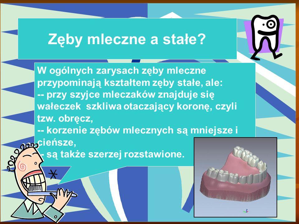 Zęby mleczne a stałe? W ogólnych zarysach zęby mleczne przypominają kształtem zęby stałe, ale: -- przy szyjce mleczaków znajduje się wałeczek szkliwa