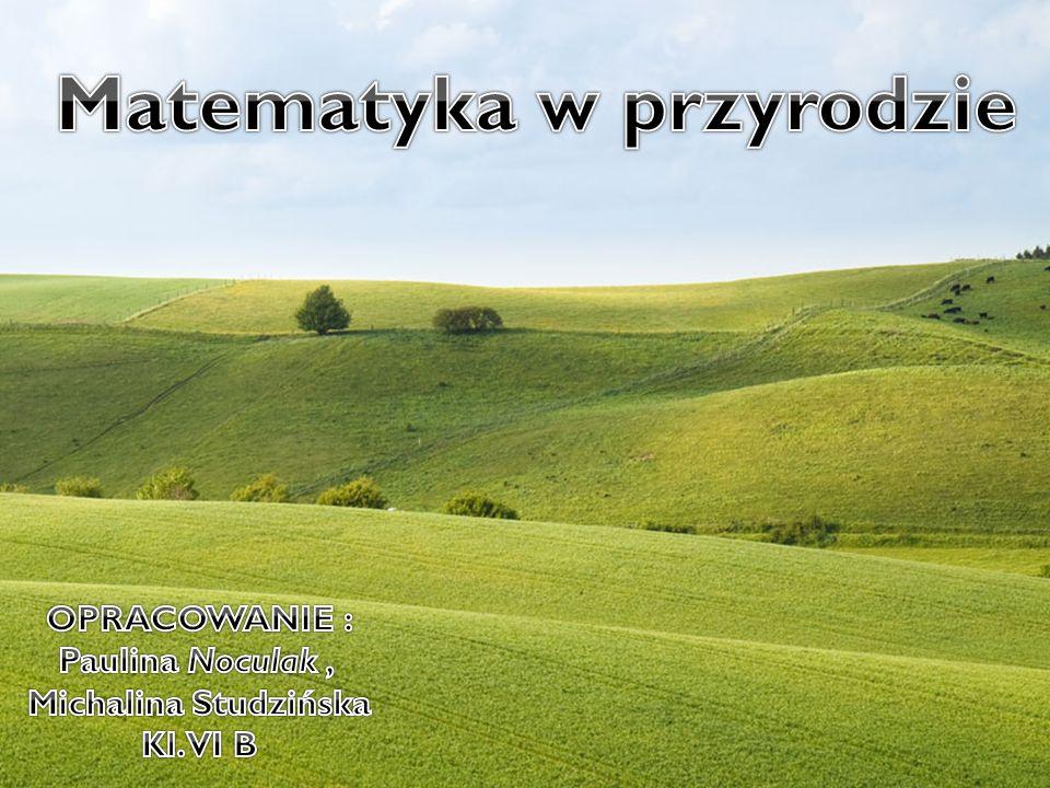 Matematyka w przyrodzie. Wykonały : Michalina Studzińska i Paulina Noculak kl. VIB