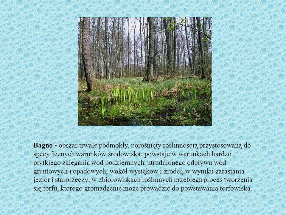 Bagno - obszar trwale podmokły, porośnięty roślinnością przystosowaną do specyficznych warunków środowiska; powstaje w warunkach bardzo płytkiego zale