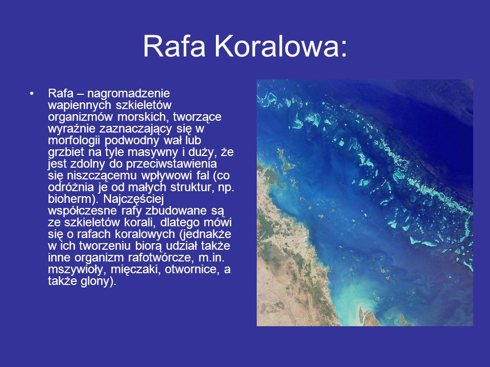 Rafa Koralowa: Rafa – nagromadzenie wapiennych szkieletów organizmów morskich, tworzące wyraźnie zaznaczający się w morfologii podwodny wał lub grzbie