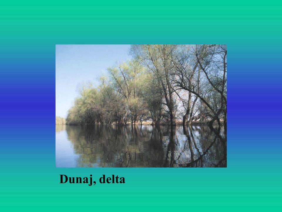 Dunaj, delta