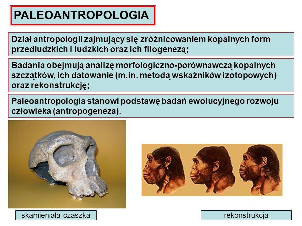 Paleoantropologia stanowi podstawę badań ewolucyjnego rozwoju człowieka (antropogeneza). PALEOANTROPOLOGIA Dział antropologii zajmujący się zróżnicowa