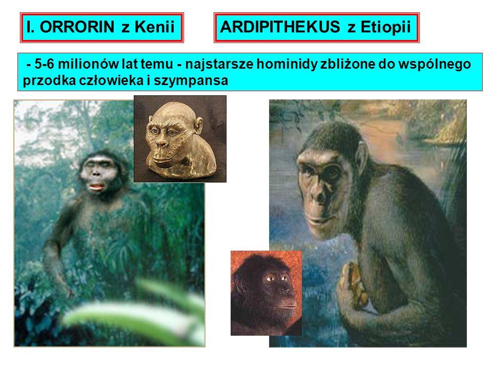- 5-6 milionów lat temu - najstarsze hominidy zbliżone do wspólnego przodka człowieka i szympansa I. ORRORIN z KeniiARDIPITHEKUS z Etiopii