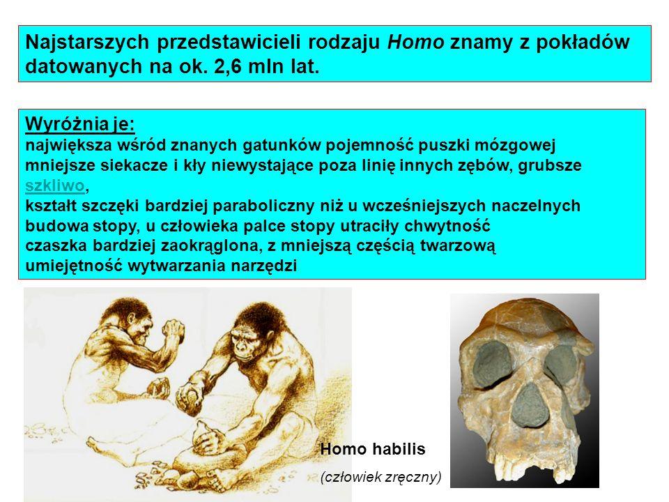 Najstarszych przedstawicieli rodzaju Homo znamy z pokładów datowanych na ok. 2,6 mln lat. Wyróżnia je: największa wśród znanych gatunków pojemność pus