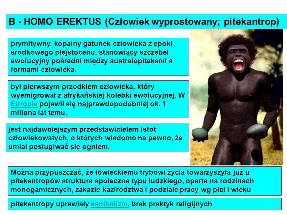 B - HOMO EREKTUS (Człowiek wyprostowany; pitekantrop) jest najdawniejszym przedstawicielem istot człowiekowatych, o których wiadomo na pewno, że umiał