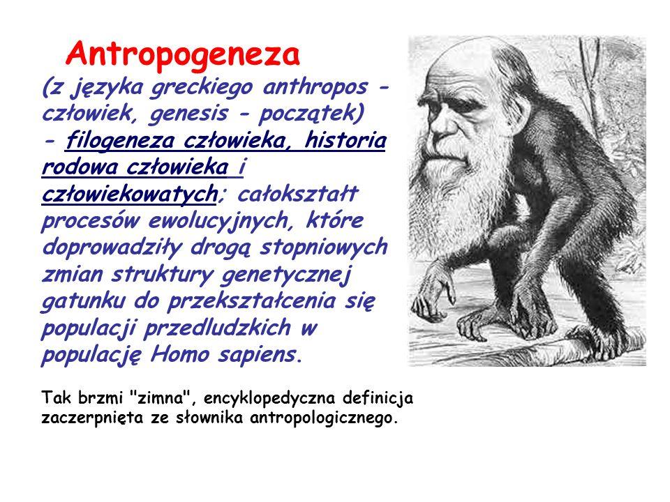 Antropogeneza (z języka greckiego anthropos - człowiek, genesis - początek) - filogeneza człowieka, historia rodowa człowieka i człowiekowatych; całok