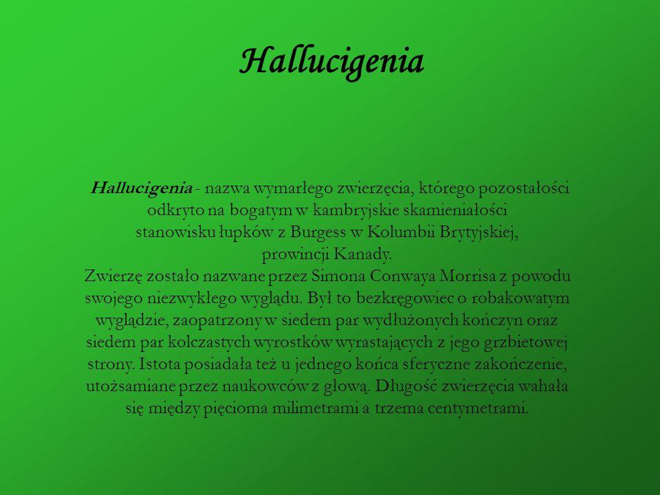 Hallucigenia Hallucigenia - nazwa wymarłego zwierzęcia, którego pozostałości odkryto na bogatym w kambryjskie skamieniałości stanowisku łupków z Burge
