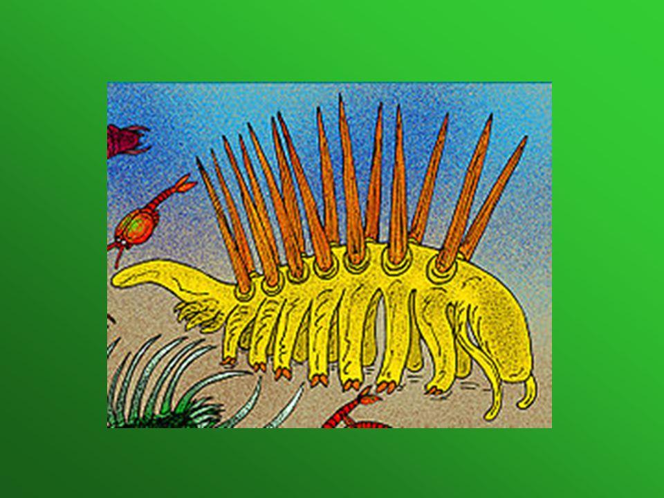 Trylobity Trylobity to gromada wymarłych morskich stawonogów o owalnym i spłaszczonym grzbietobrzusznie ciele, z wyraźnie wyróżnioną częścią głowową, tułowiową i ogonową.