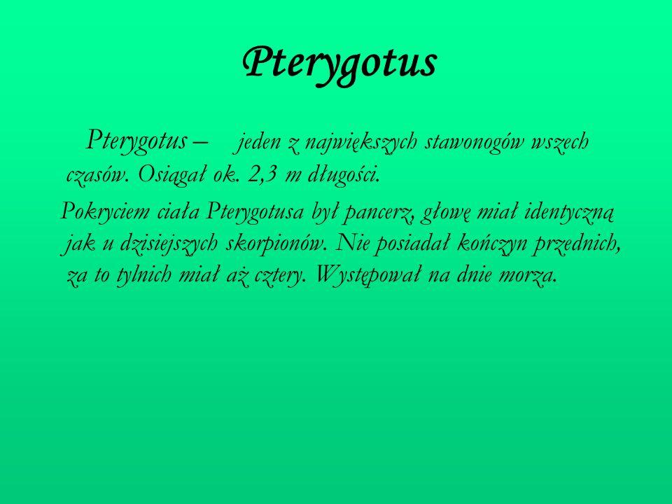 Pterygotus Pterygotus – jeden z największych stawonogów wszech czasów. Osiągał ok. 2,3 m długości. Pokryciem ciała Pterygotusa był pancerz, głowę miał