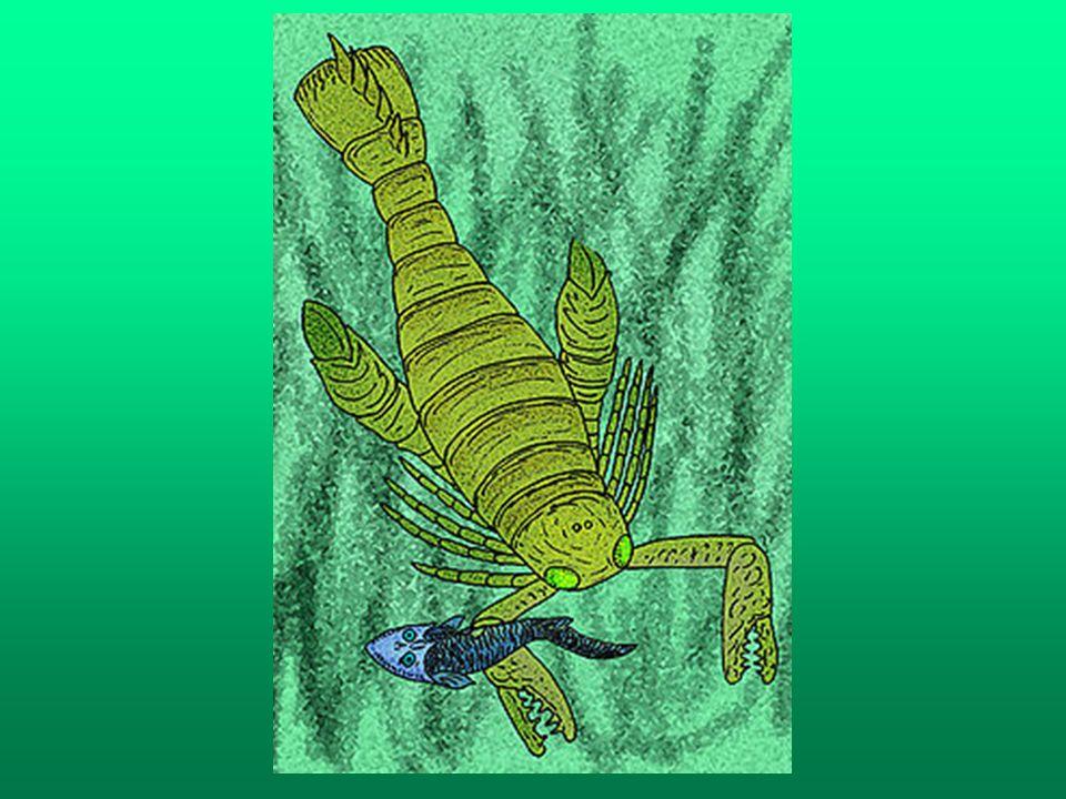 Anomalocaris Anomalocaris - rodzaj żyjących w kambrze drapieżników morskich, spokrewnionych z opabinią.