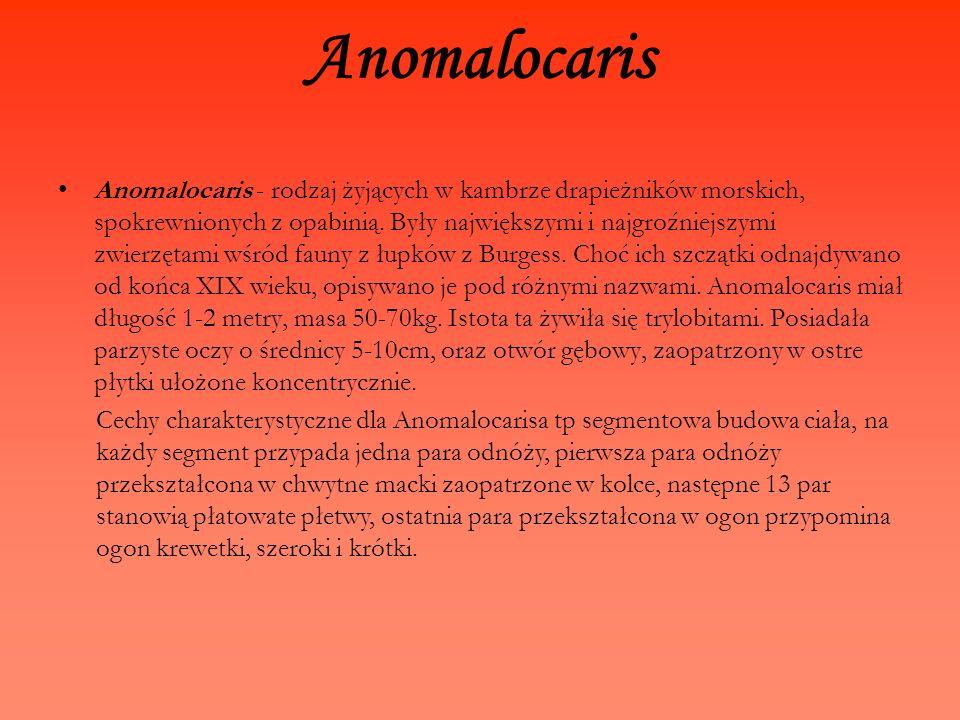 Anomalocaris Anomalocaris - rodzaj żyjących w kambrze drapieżników morskich, spokrewnionych z opabinią. Były największymi i najgroźniejszymi zwierzęta