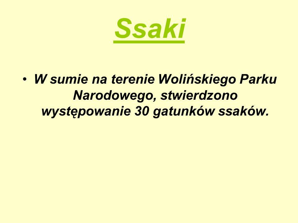 Ssaki W sumie na terenie Wolińskiego Parku Narodowego, stwierdzono występowanie 30 gatunków ssaków.