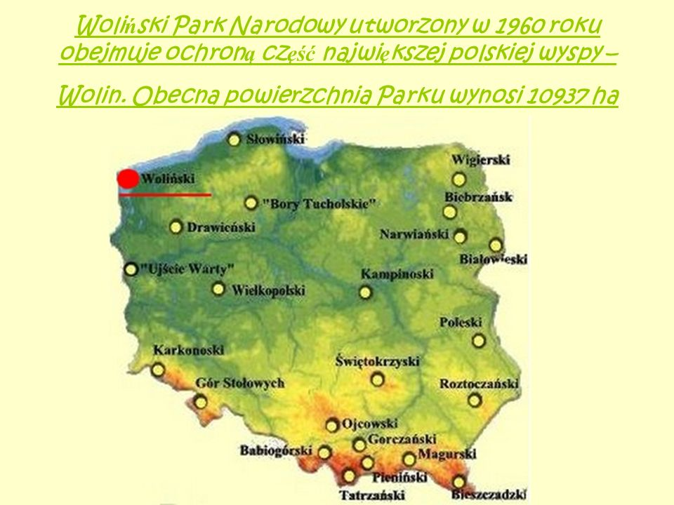Woli ń ski Park Narodowy utworzony w 1960 roku obejmuje ochron ą cz ęść najwi ę kszej polskiej wyspy – Wolin. Obecna powierzchnia Parku wynosi 10937 h