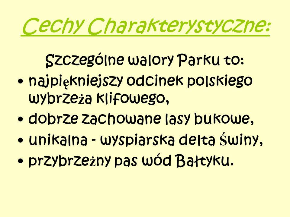 Cechy Charakterystyczne: Szczególne walory Parku to: najpi ę kniejszy odcinek polskiego wybrze ż a klifowego, dobrze zachowane lasy bukowe, unikalna -