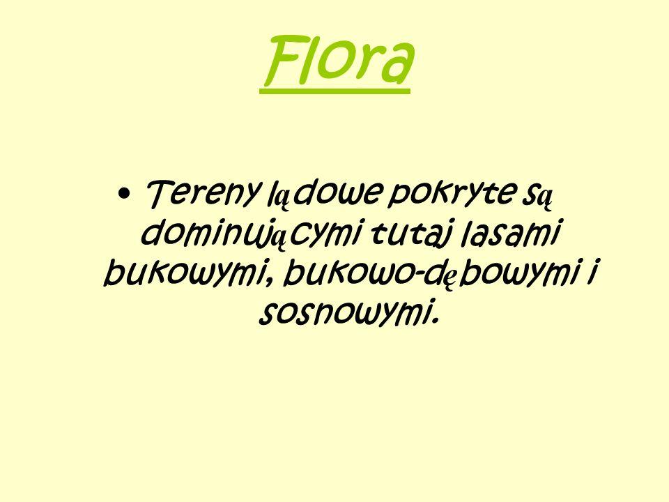 Flora Tereny l ą dowe pokryte s ą dominuj ą cymi tutaj lasami bukowymi, bukowo-d ę bowymi i sosnowymi.