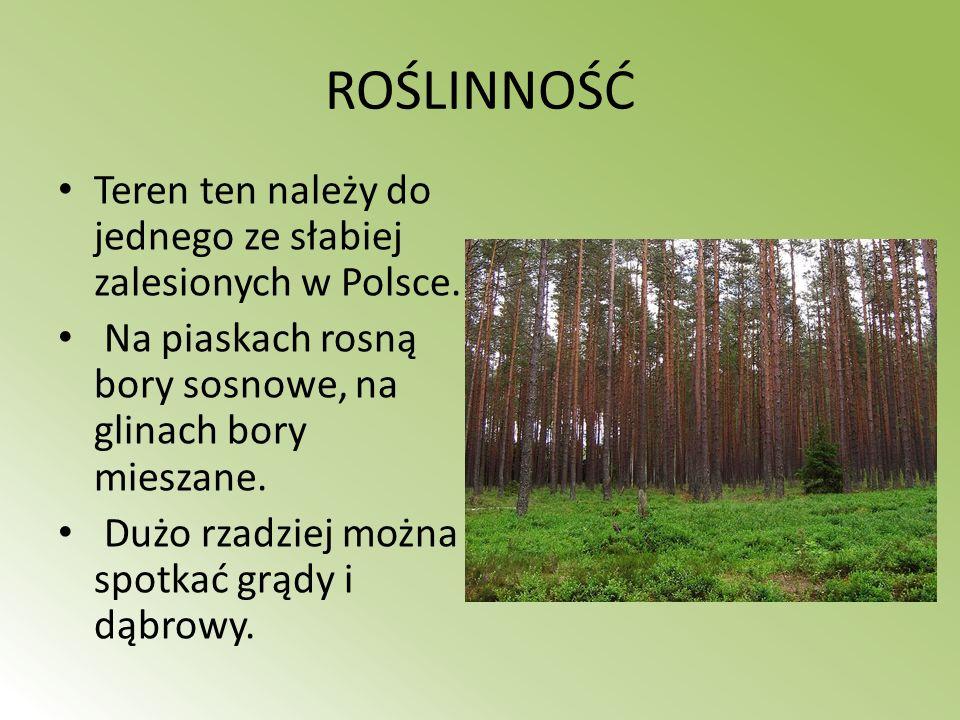 ROŚLINNOŚĆ Teren ten należy do jednego ze słabiej zalesionych w Polsce. Na piaskach rosną bory sosnowe, na glinach bory mieszane. Dużo rzadziej można