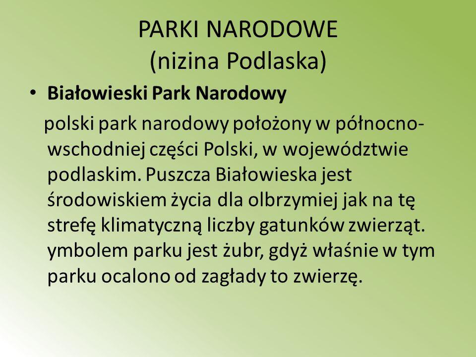 PARKI NARODOWE (nizina Podlaska) Białowieski Park Narodowy polski park narodowy położony w północno- wschodniej części Polski, w województwie podlaski