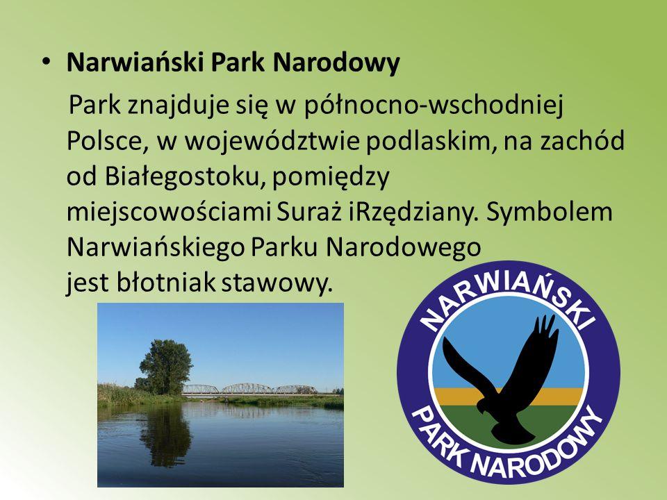 Narwiański Park Narodowy Park znajduje się w północno-wschodniej Polsce, w województwie podlaskim, na zachód od Białegostoku, pomiędzy miejscowościami