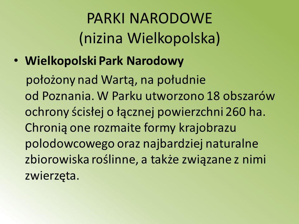 PARKI NARODOWE (nizina Wielkopolska) Wielkopolski Park Narodowy położony nad Wartą, na południe od Poznania. W Parku utworzono 18 obszarów ochrony ści