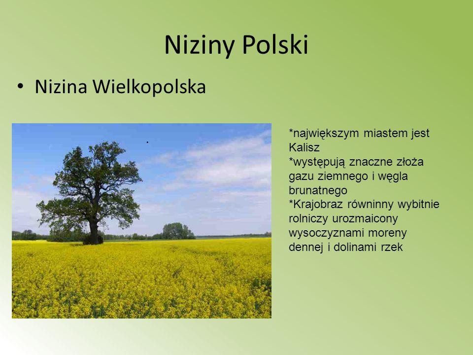 Niziny Polski Nizina Wielkopolska *największym miastem jest Kalisz *występują znaczne złoża gazu ziemnego i węgla brunatnego *Krajobraz równinny wybit