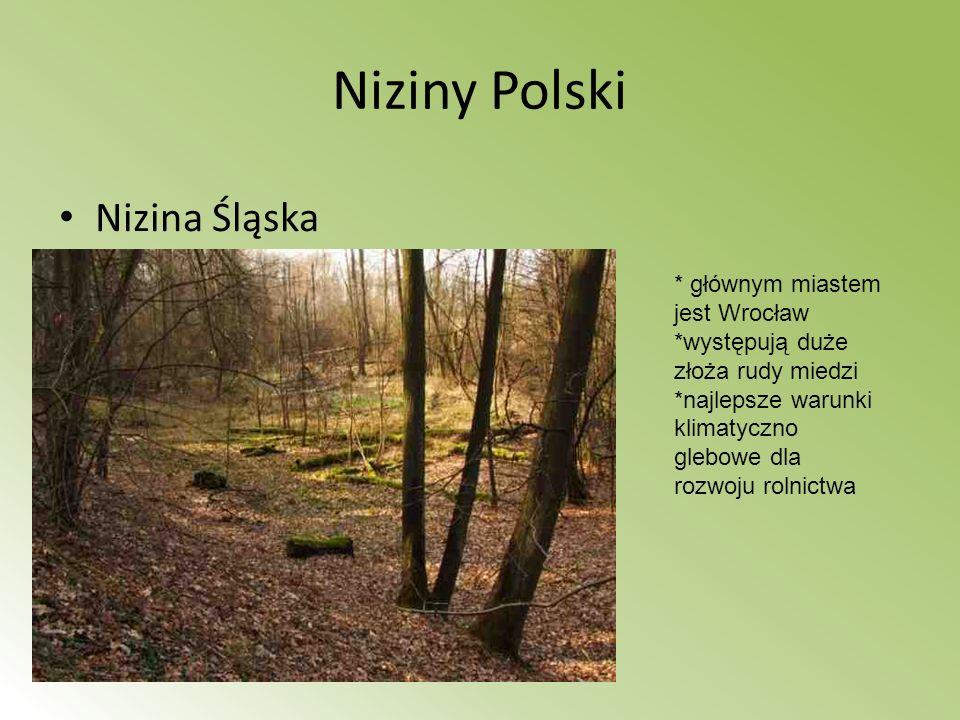 Niziny Polski Nizina Śląska * głównym miastem jest Wrocław *występują duże złoża rudy miedzi *najlepsze warunki klimatyczno glebowe dla rozwoju rolnic