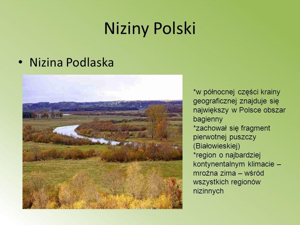 Niziny Polski Nizina Mazowiecka *jedynym zwartym kompleksem leśnym pozostała Puszcza Kampinowska * przecina ją Wisła *Największe miasto - Warszawa