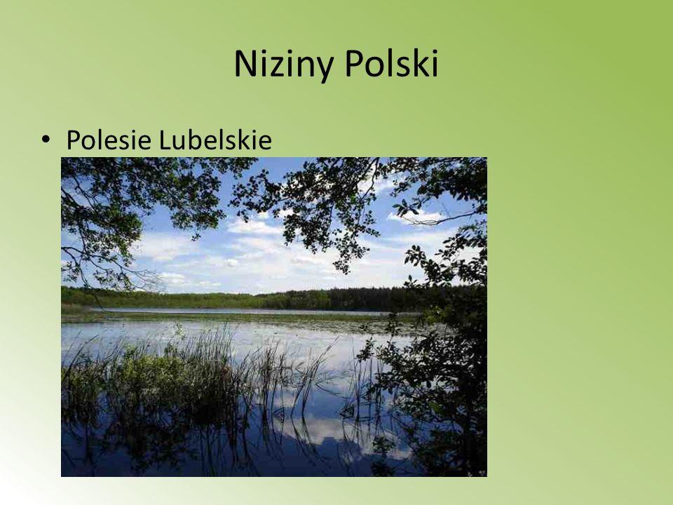 PARKI NARODOWE (nizina Podlaska) Białowieski Park Narodowy polski park narodowy położony w północno- wschodniej części Polski, w województwie podlaskim.