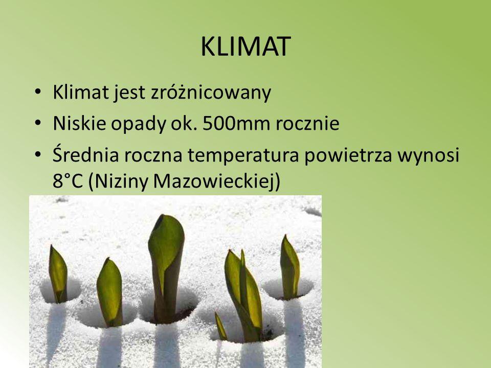 KLIMAT Klimat jest zróżnicowany Niskie opady ok. 500mm rocznie Średnia roczna temperatura powietrza wynosi 8°C (Niziny Mazowieckiej)