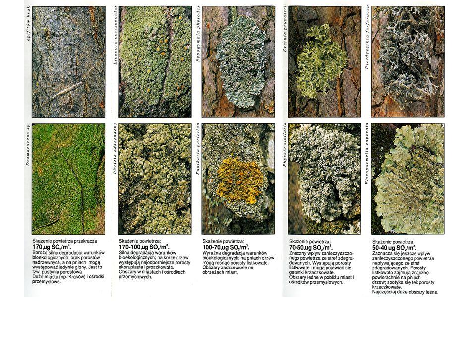 Rozkład mikrobiologiczny Aktywność mikrobiologiczna decyduje o tempie mineralizacji netto biogenów w ekosystemie.