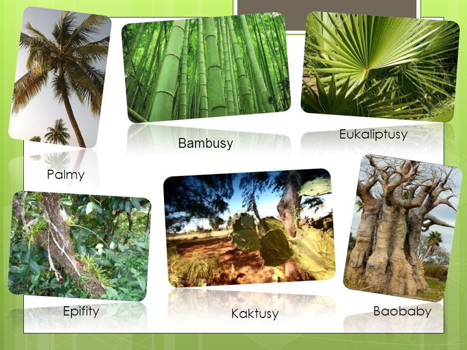 Palmy Eukaliptusy Baobaby Bambusy Kaktusy Epifity