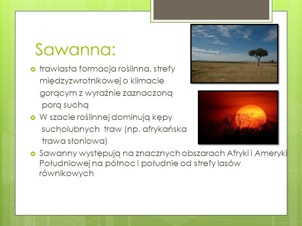 Sawanna: trawiasta formacja roślinna, strefy międzyzwrotnikowej o klimacie gorącym z wyraźnie zaznaczoną porą suchą W szacie roślinnej dominują kępy s