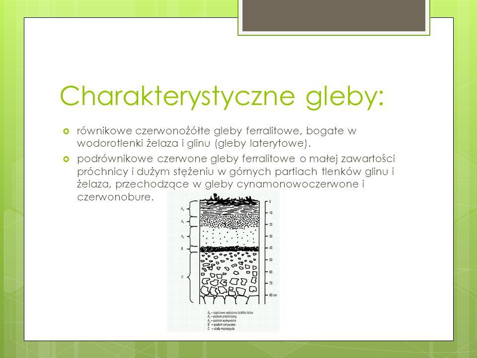 Charakterystyczne gleby: równikowe czerwonożółte gleby ferralitowe, bogate w wodorotlenki żelaza i glinu (gleby laterytowe). podrównikowe czerwone gle