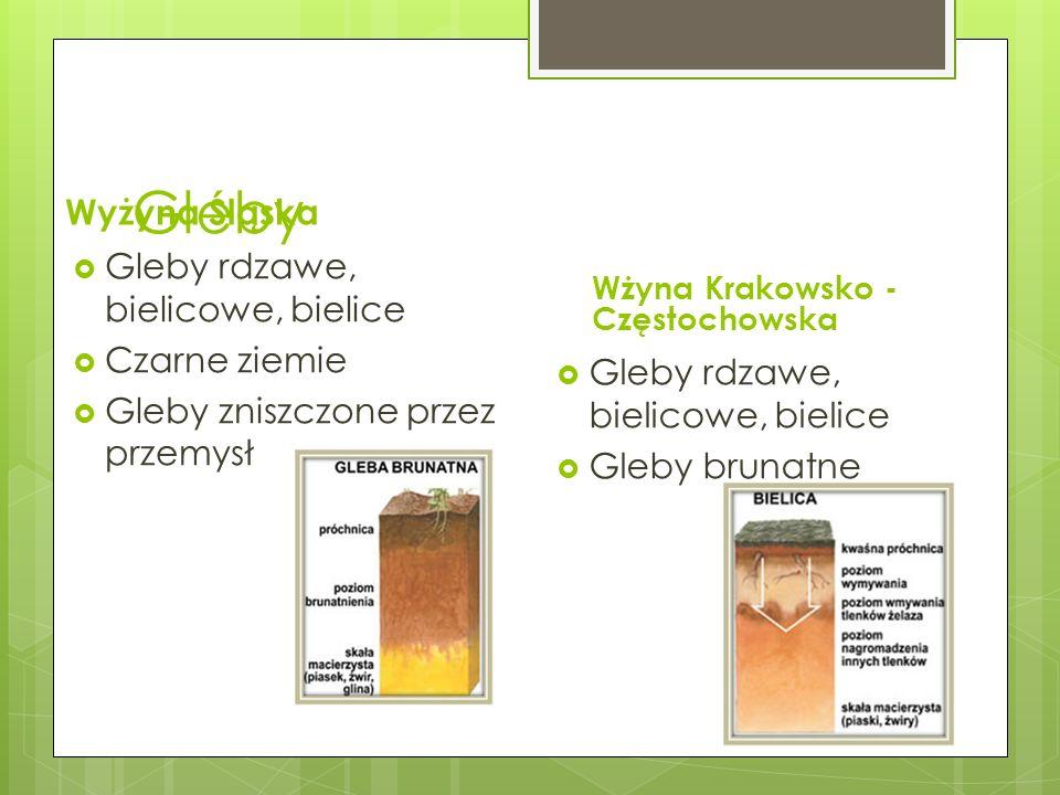 Gleby Wyżyna Śląska Gleby rdzawe, bielicowe, bielice Czarne ziemie Gleby zniszczone przez przemysł Wżyna Krakowsko - Częstochowska Gleby rdzawe, bieli