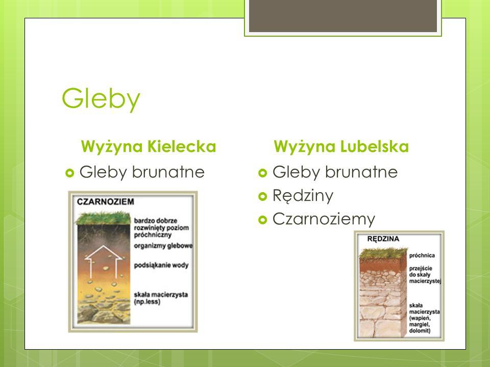 Gleby Wyżyna Kielecka Gleby brunatne Wyżyna Lubelska Gleby brunatne Rędziny Czarnoziemy