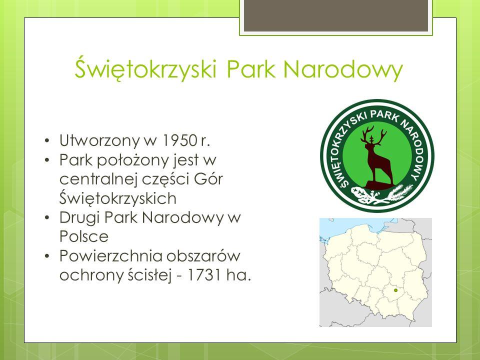 Świętokrzyski Park Narodowy Utworzony w 1950 r. Park położony jest w centralnej części Gór Świętokrzyskich Drugi Park Narodowy w Polsce Powierzchnia o