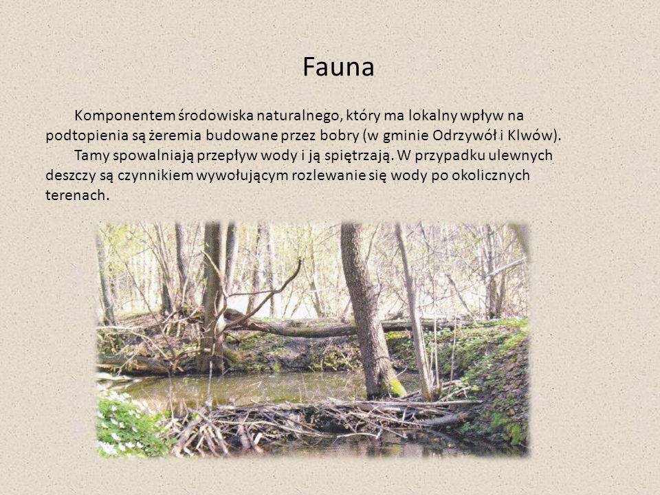 Fauna Komponentem środowiska naturalnego, który ma lokalny wpływ na podtopienia są żeremia budowane przez bobry (w gminie Odrzywół i Klwów). Tamy spow
