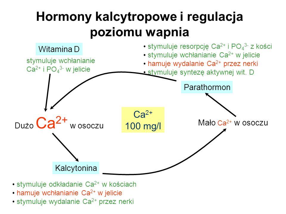 Hormony kalcytropowe i regulacja poziomu wapnia Dużo Ca 2+ w osoczu Mało Ca 2+ w osoczu Kalcytonina stymuluje odkładanie Ca 2+ w kościach hamuje wchła