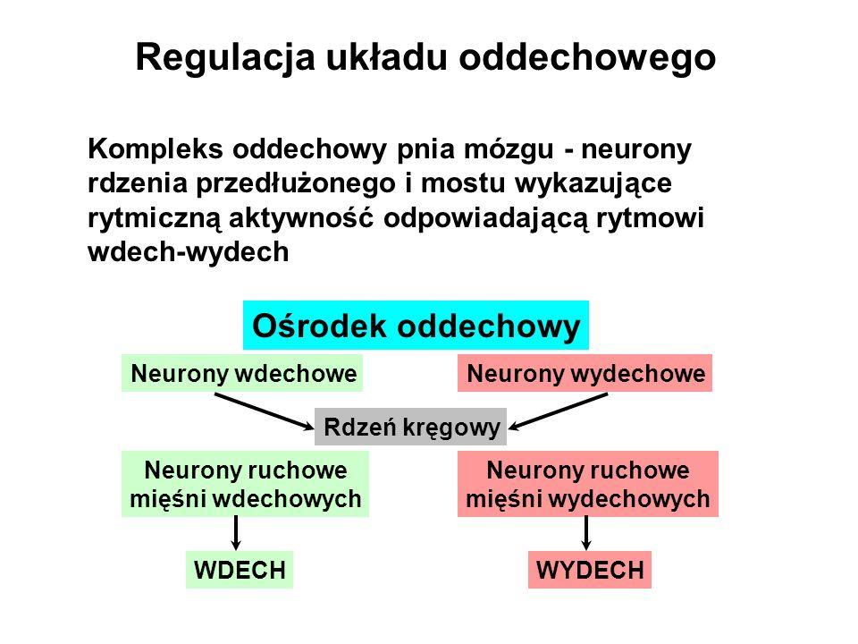 Regulacja wodno-elektrolitowa Renina