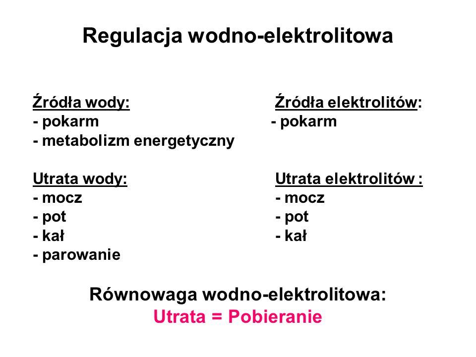 Regulacja wodno-elektrolitowa Źródła wody: Źródła elektrolitów: - pokarm - metabolizm energetyczny Utrata wody: Utrata elektrolitów : - mocz - pot - k