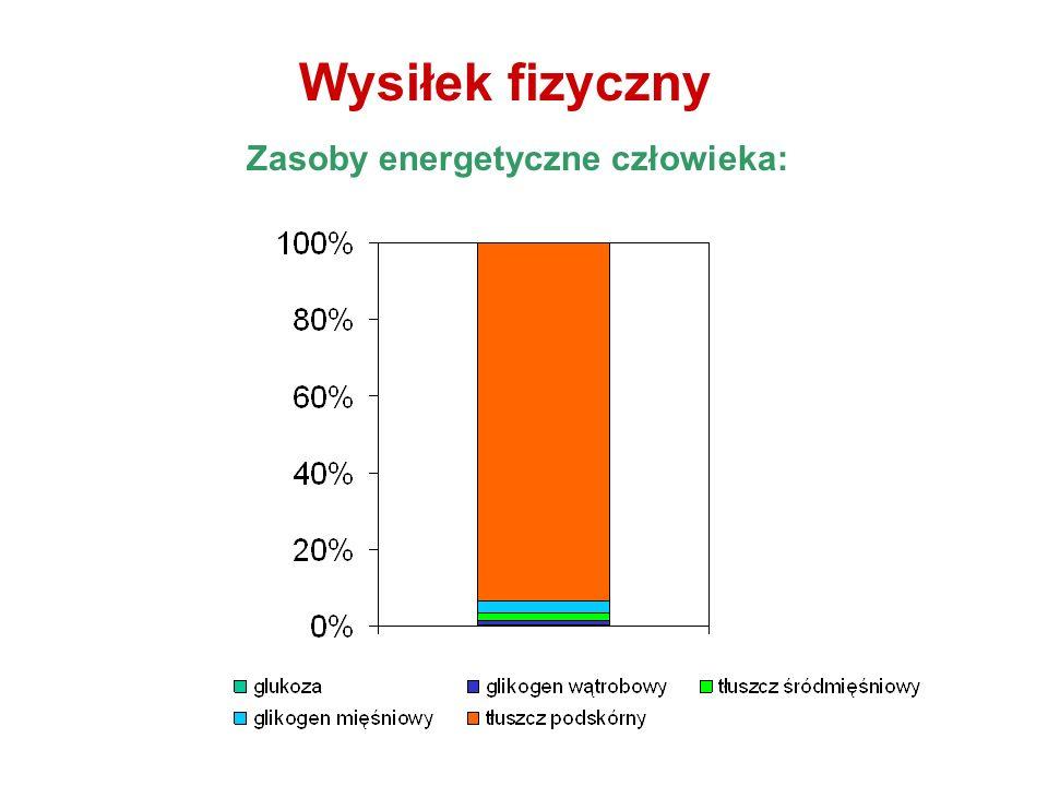 Zasoby energetyczne człowieka: Wysiłek fizyczny