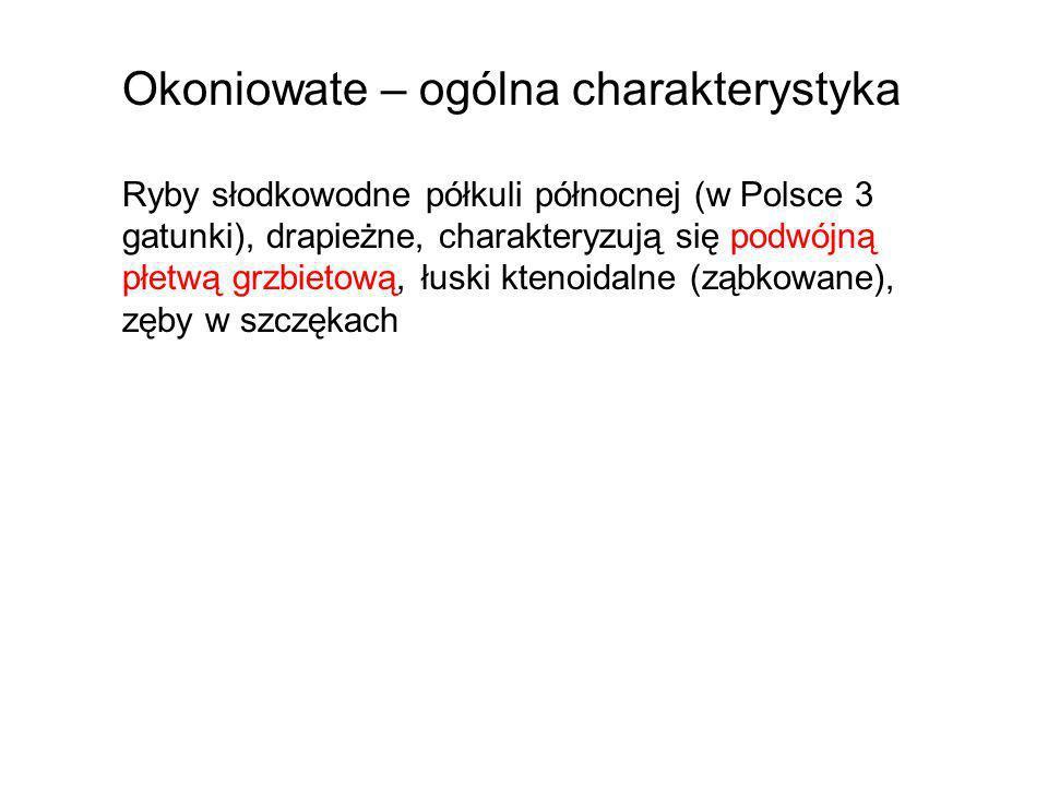Okoniowate – ogólna charakterystyka Ryby słodkowodne półkuli północnej (w Polsce 3 gatunki), drapieżne, charakteryzują się podwójną płetwą grzbietową,