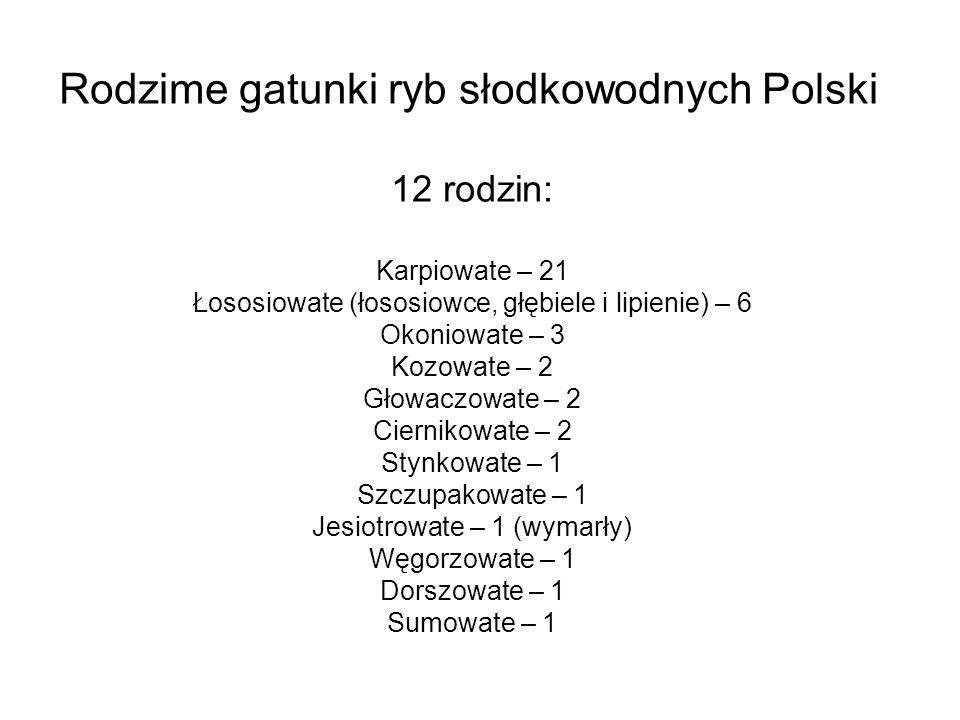 Rodzime gatunki ryb słodkowodnych Polski 12 rodzin: Karpiowate – 21 Łososiowate (łososiowce, głębiele i lipienie) – 6 Okoniowate – 3 Kozowate – 2 Głow